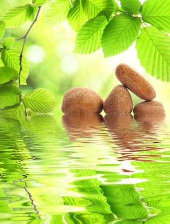gezondheid: Zen stenen en groen laat spa concept met water reflectie weergegeven: Stockfoto