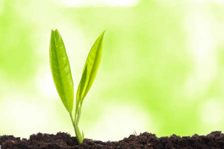 young plant showing ecology growth or nature concept with copyspace Stock Photo - 7994483