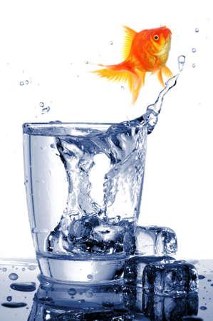 Carassius auratus en vaso de bebida que muestra libre de prisi�n de c�rcel o concepto de libertad  Foto de archivo - 7994519