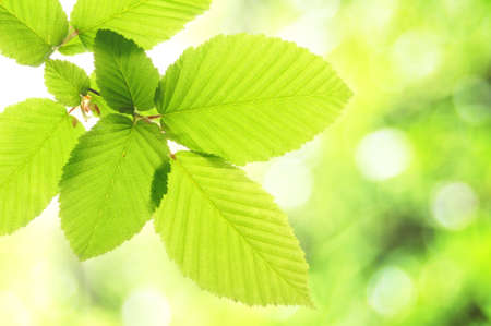 green summer or spring leaf with empty copyspace Stock Photo - 7994564