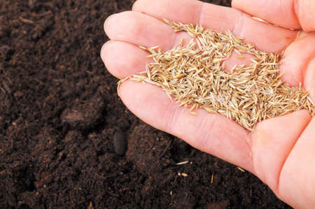 sowing hand and soil showing growth or agriculture concept Stock Photo - 7994562