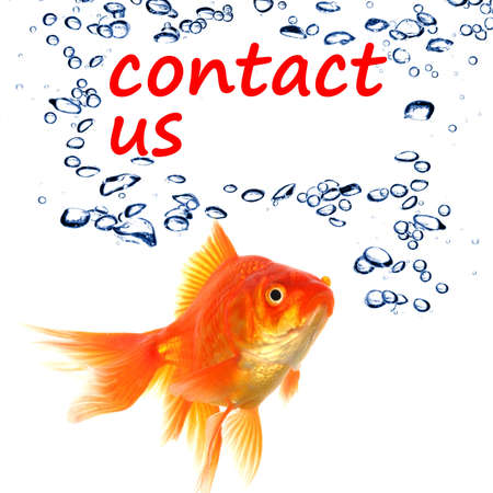 contact us concept with goldfish showing support service or email communication photo