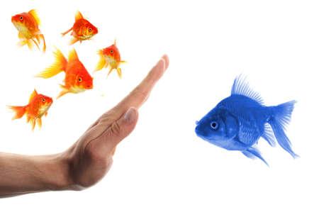 intolerancia: discriminante concepto de racismo o intolerancia de forastero con peces dorados y mano  Foto de archivo