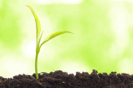 growth concept with growing young plant in nature Stock Photo - 8046342