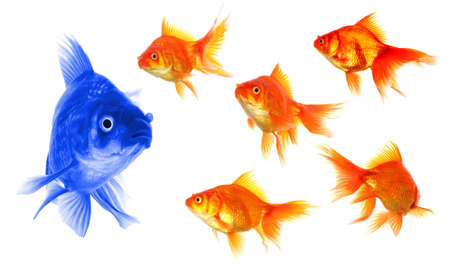 peces de colores: de pie sobre el concepto de la multitud con peces dorados con �xito individual