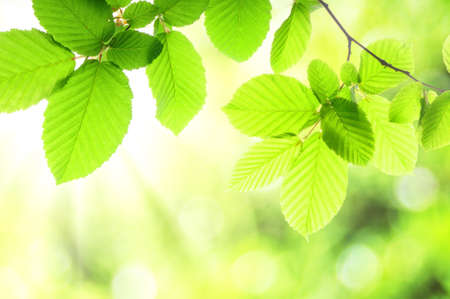 summer or spring nature concept with green leaves and bokeh photo