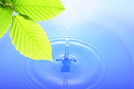 green leaves and splashing water drop showing spa or zen Stok Fotoğraf