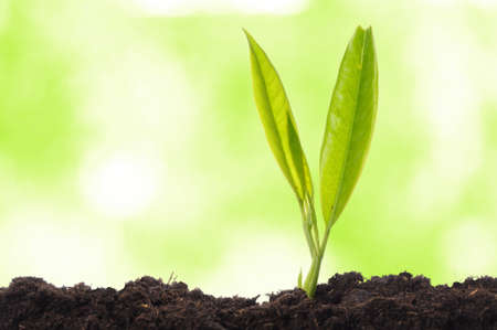growth concept with growing young plant in nature Stock Photo - 8067174