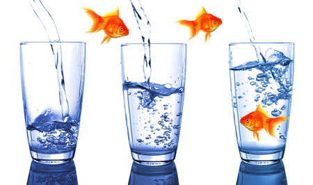 goldfish and glass showing financial growth concept photo