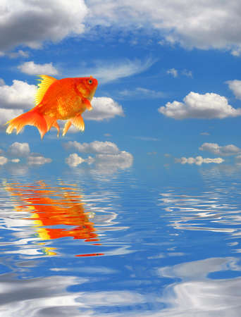 blue sky goldfish with water reflection clouds and copyspace Stock Photo - 8067314