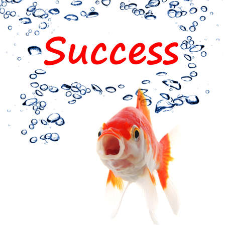 achivement: goldfish and word success showing business finance or growth concept Stock Photo