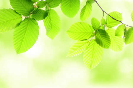 green summer leaves with copyspace showing nature concept Stok Fotoğraf