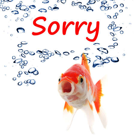 apology: sorry concept with word and goldfish isolated on white background Stock Photo