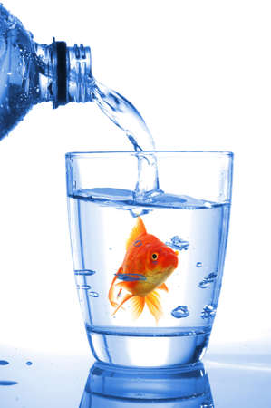 goldfish in drink glass showing jail prison free or freedom concept Stock Photo - 8119877