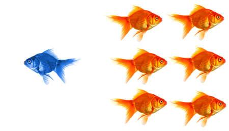 staande uit de menigte concept met individuele succesvolle goldfish