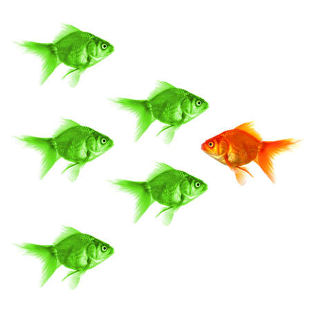 individual success winner outsider boss or motivation concept with goldfish isolated on white Stock Photo - 8119900