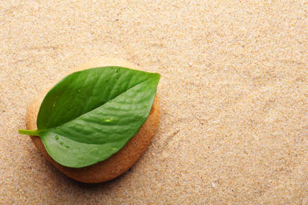 zen stone with leaf on sand showing spa concept photo