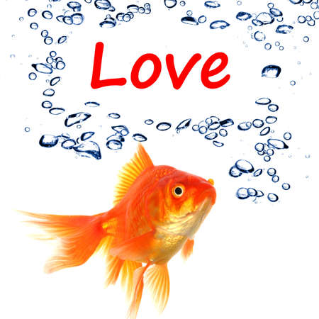 happieness: love or romance concept with goldfish on white background