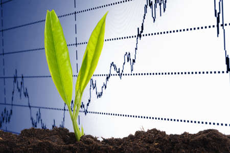 finance or business growth concept with young plant photo