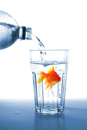 goldfish in drink glass showing jail prison free or freedom concept Stock Photo - 8183139