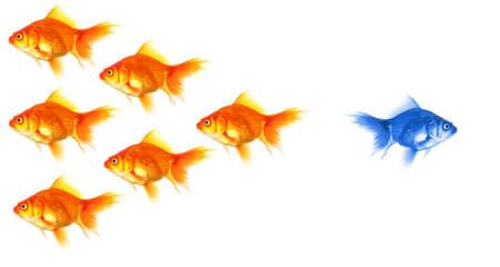 discriminacion: de pie sobre el concepto de la multitud con peces dorados con �xito individual