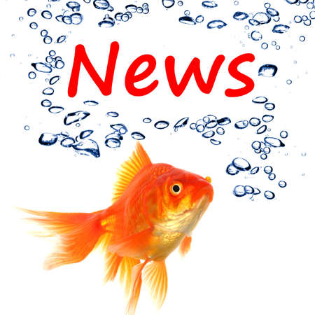 news or newsletter concept with word and goldfish on white background photo