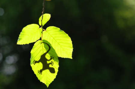 gecko shadow on green leaf texture showing nature concept with copyspace photo