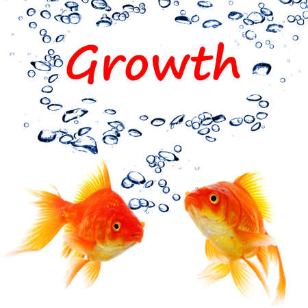 business growth or success concept with goldfish Stock Photo - 8221669