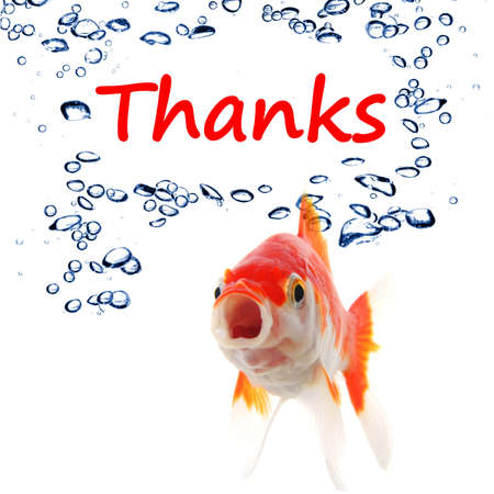 thanks or thank you concept with word and goldfish Stock Photo - 8221663
