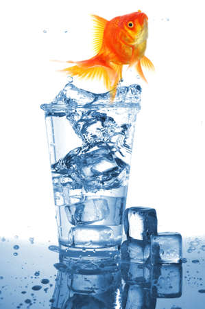 goldfish in glass of water showing challenge or creativity concept photo