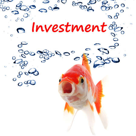 investment invest finance financial or business concept with goldfish on white photo