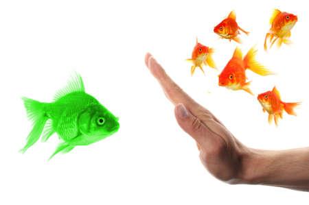 intolerancia: discriminante concepto de racismo o intolerancia de forastero con peces dorados y mano