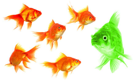 goldfish showing discrimination success individuality leadership or motivation concept Stock Photo