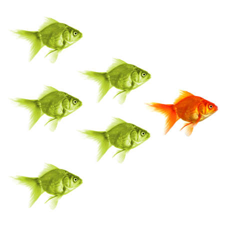 standing out of the crowd concept with individual successful goldfish