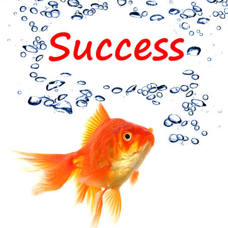 goldfish and word success showing business finance or growth concept Standard-Bild