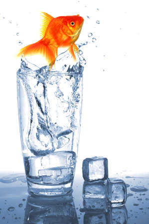 goldfish in cocktail drink glass and water showing bar flee free or jail concept
