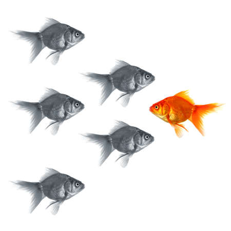 odd jobs: standing out of the crowd concept with individual successful goldfish