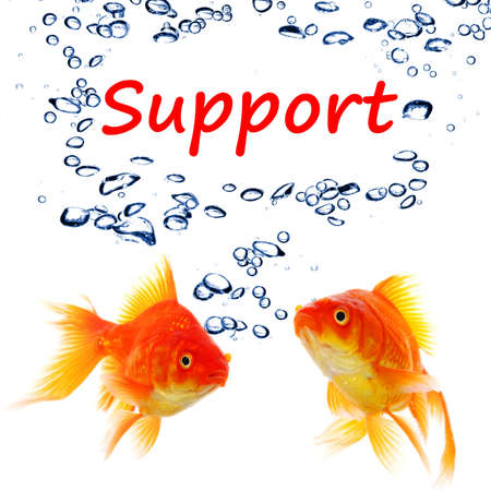 support or contact us concept with goldfish and water bubbles on white Stock Photo - 8509185