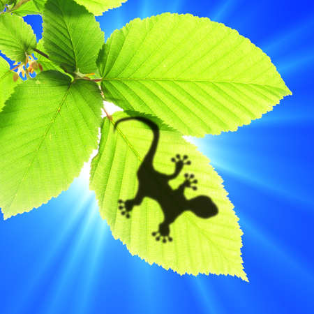 lagartijas: Fondo tropical con animal de hoja y gecko o lagarto