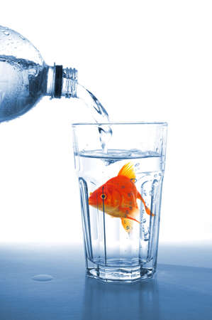 goldfish in glass of water showing challenge or creativity concept Stock Photo - 8578656