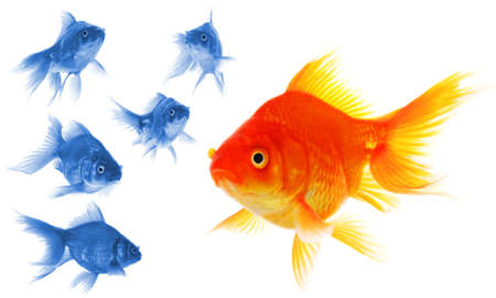 individuality: standing out of the crowd concept with individual successful goldfish