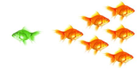 Peces de colores que muestra la discriminación éxito individualidad liderazgo o motivación el concepto de Foto de archivo - 8578732