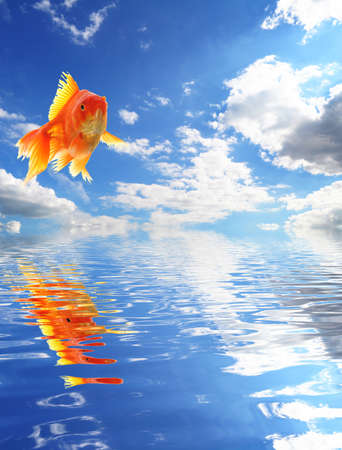 jumping goldfish and ocean with sky and water reflection photo