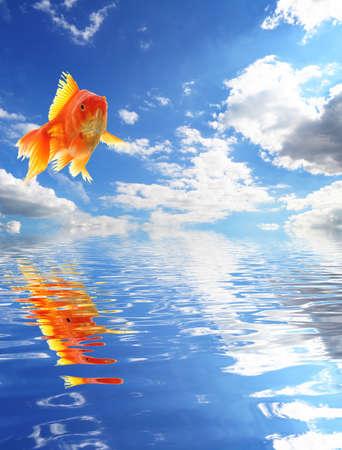 złota rybka: Skoki goldfish i Oceanie z nieba i wody refleksji
