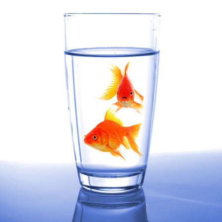 goldfish in cocktail drink glass and water showing bar flee free or jail concept photo