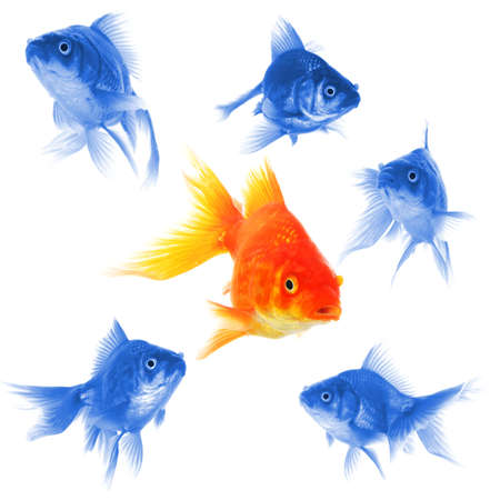 change direction: goldfish showing discrimination success individuality leadership or motivation concept Stock Photo