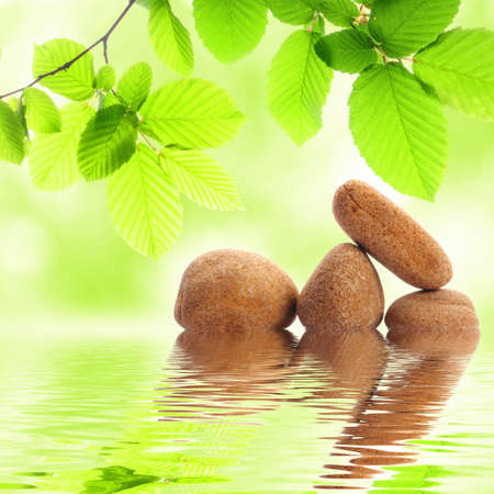 zen stones and green summer leaves with water reflection Stock Photo - 8705566