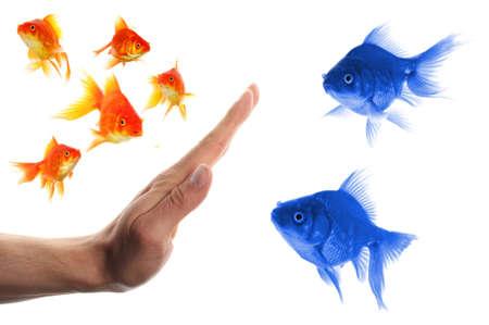 intolerancia: discriminante concepto de racismo o intolerancia de forastero con peces de colores y mano Foto de archivo