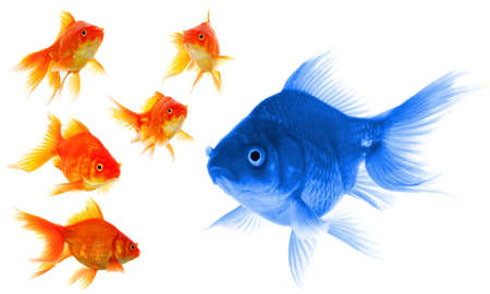 different: goldfish showing leader individuality success or motivation concept