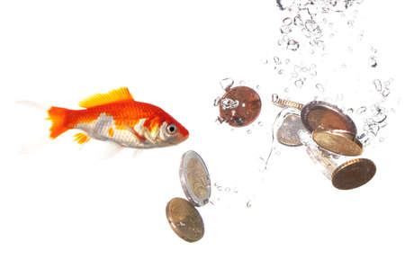goldfish and euro money showing finance or investment concept photo